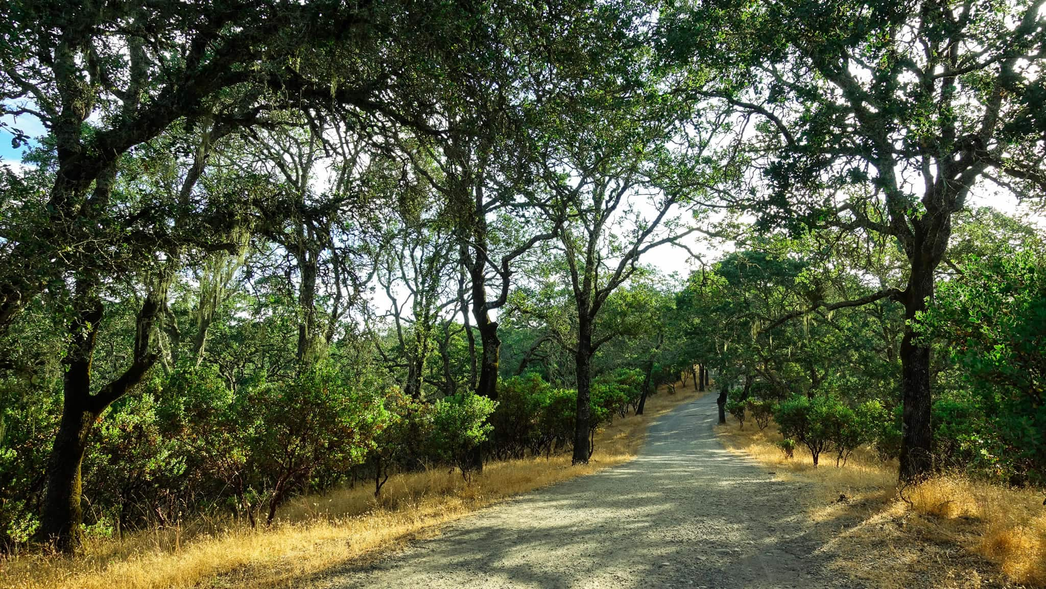 Hiking the open trails of Foothills Park near Healdsburg is a great start to your morning