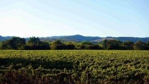Rolling Green Vineyards on Healdsburg's Eastside Road