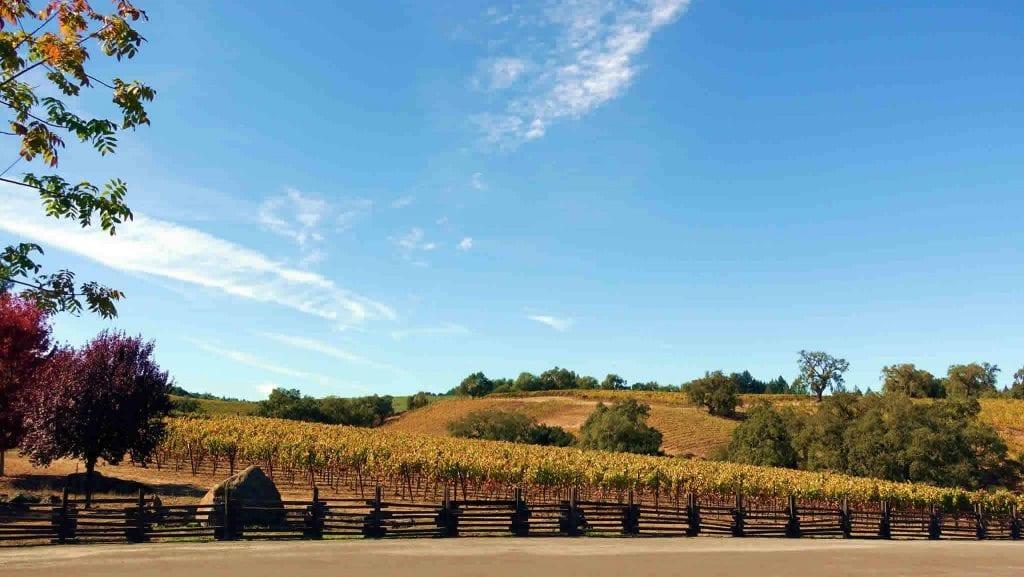 Autumn Driving Healdsburg's Westside Road Vineyards