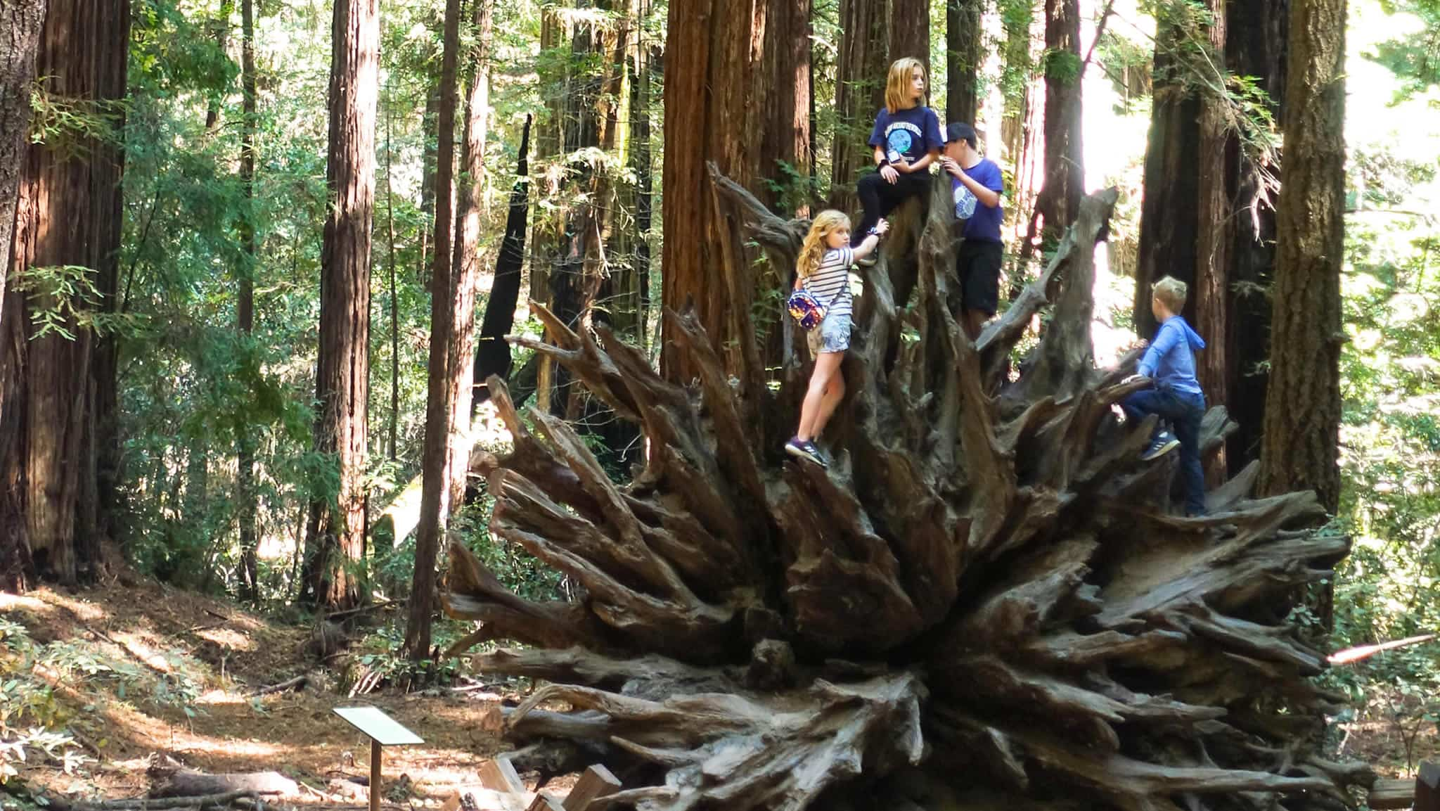 Hiking near healdsburg CA Armstrong Woods kids playing