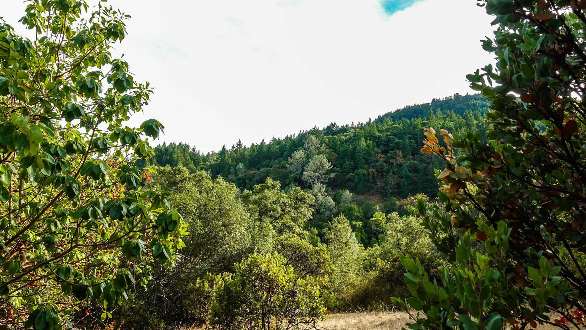 Be Sure to Look to your Sides Along Lake Sonoma's Trails - Mountain Views Abound!