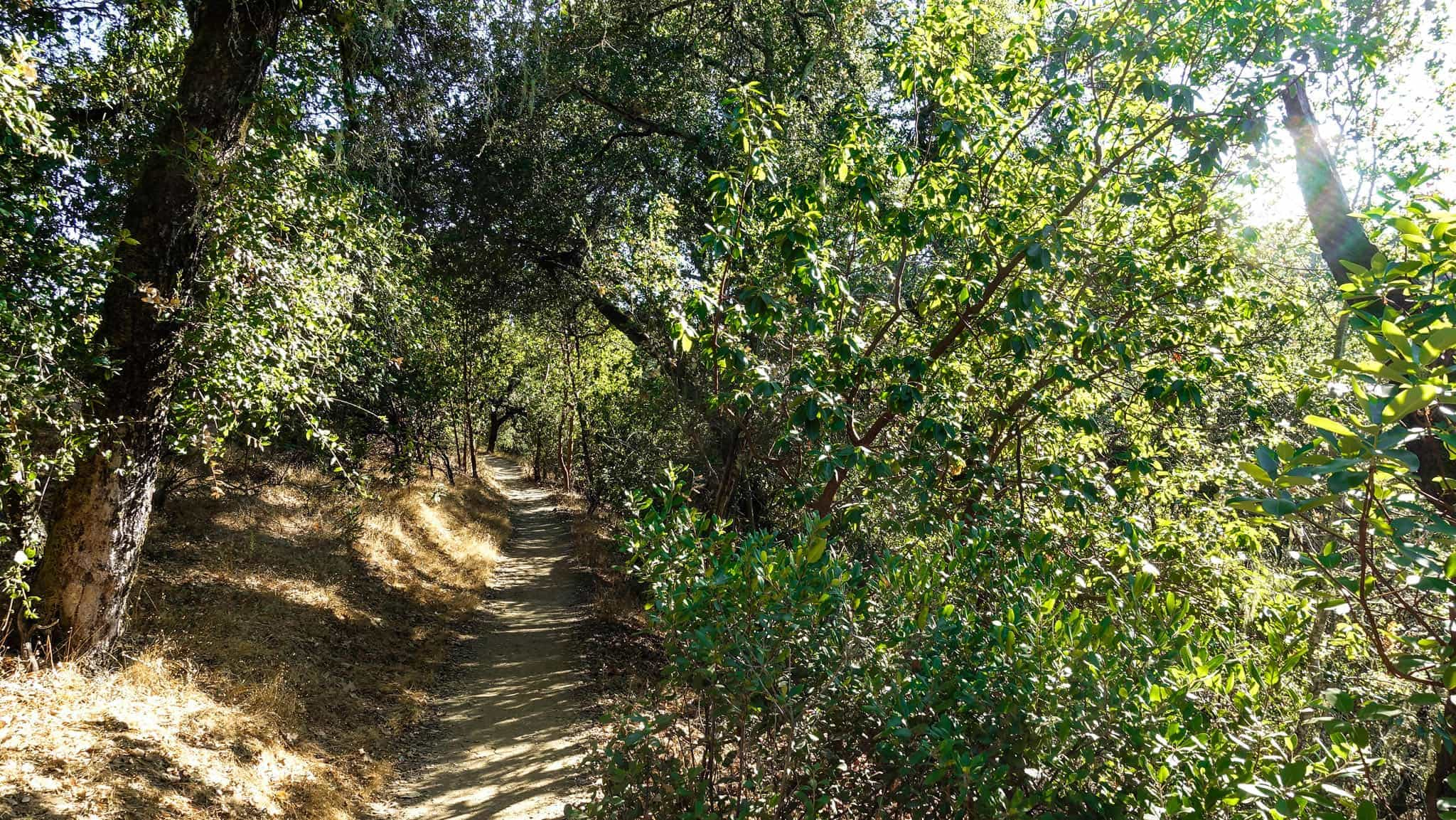 Open Ridge Preserve Has Nice Hiking Trails In Healdsburg