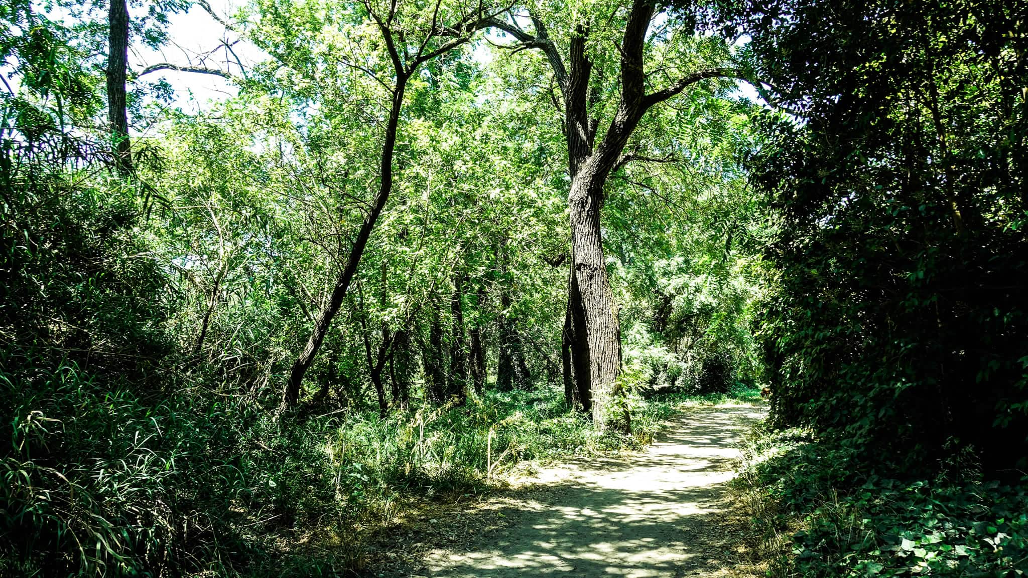 Riverwalk Trail has Nice Sections which are Well-Shaded