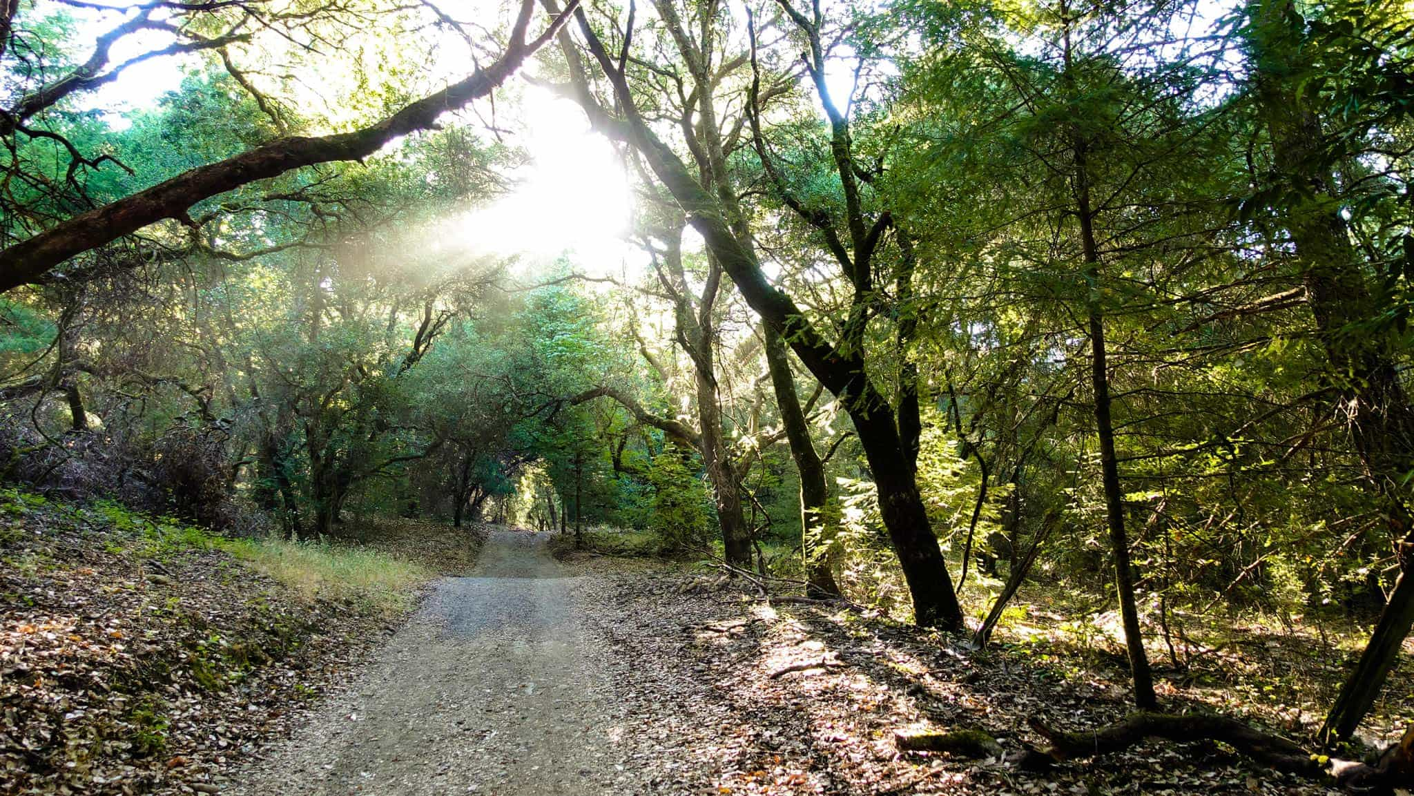 Morning Dawns as the Hiking Trail Gently Begins in Shiloh Regional Park