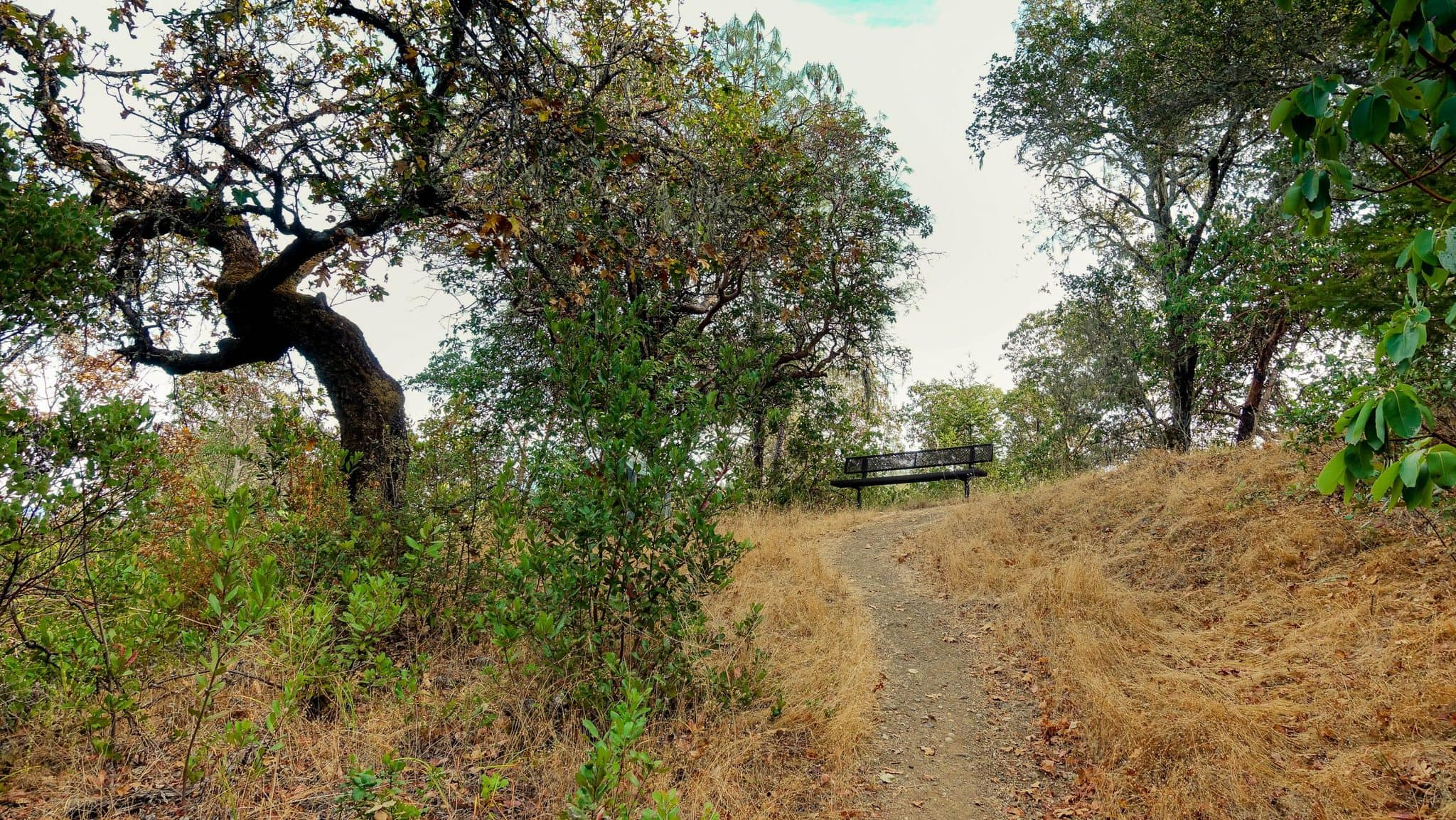 There are Ample Benchs on Lake Sonoma Trails