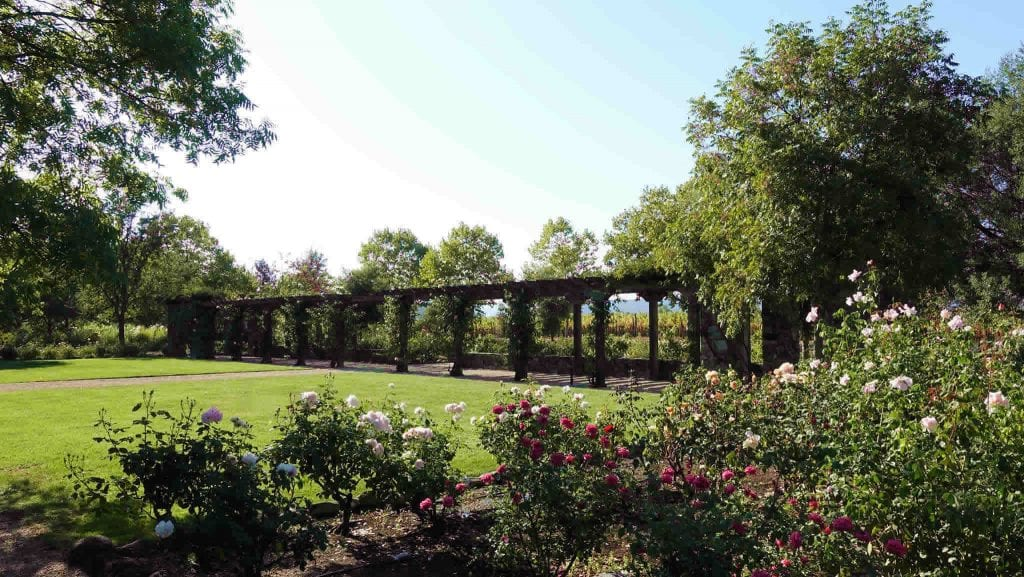 Stone Street Winery Rose Garden Healdsburg