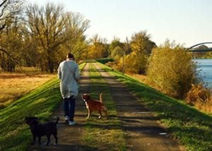 Dog trails and parks in Healdsburg