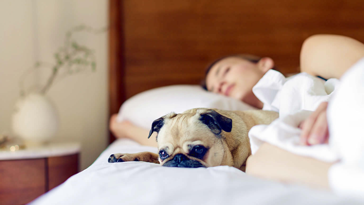 Dog friendly hotels and B&Bs in Healdsburg
